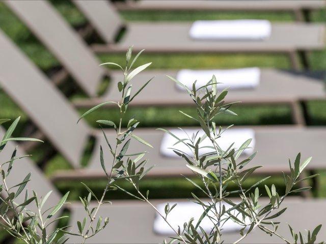 hote-das-stachelburg-garten-olivenbaum-liegestuehle.jpg